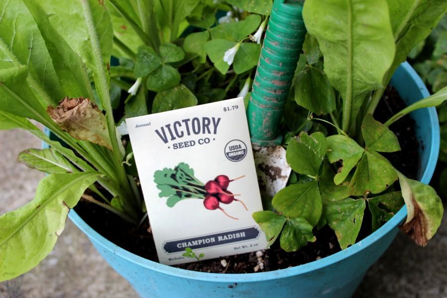 victoryseeds_radish_garden
